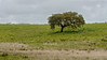 Lonely tree in Alentejo