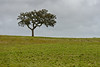 Another lonely tree, Alentejo