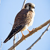Kestrel-day2-0469