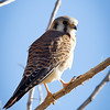 Kestrel-day2-0470