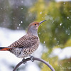 FLicker-Web_0127