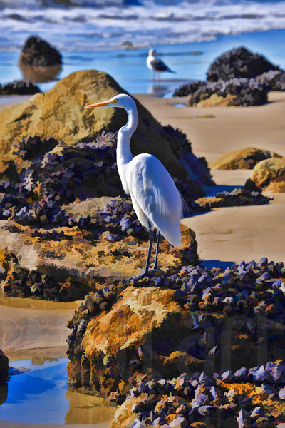 Egret On The Beach | Wall Art Resource