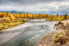 A grove of bright yellow and golden cottonwood trees line the Gros Ventre River near Antelope Flats in Jackson Hole Wyoming on a day with turbulent weather making a dramatic sky.