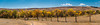 A panoramic photograph of an idyllic scene of yellow cottonwood trees, a golden meadow, cobalt blue sky framed by an old fence in Custer State Park in South Dakota