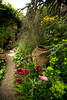 Papaver Patty's Plum pathway_Doreen Wynja_017