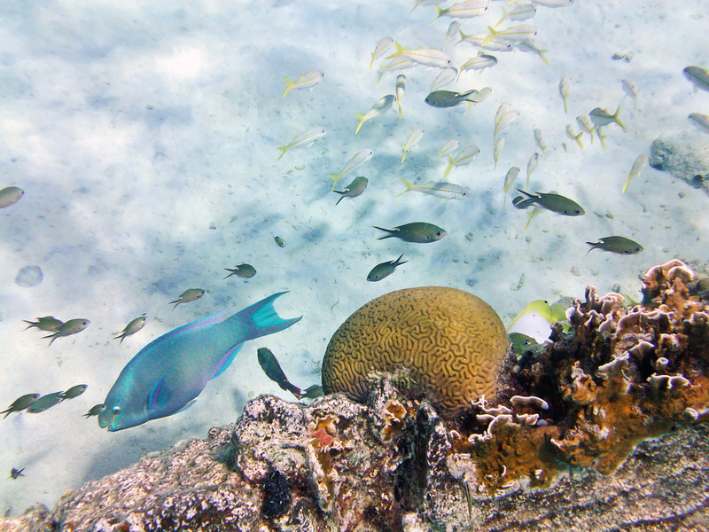 Coral reef along the west coast of Bonaire
