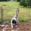 "Nothing Like Having Dog ""Doors"" Between All of the Pastures."