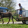 We harnessed up the donkey and led him a few times around the drive then put the bit in his mouth and the reins on so we could see how he drives. He got better as we did it until he would see Jenny, then he was bound to go to her. But even that got better after he saw that we would not stand for that. We still have to work on a few things like backing and always going where we want to go and not where he wants to go. We have a seat welded up; I just have to paint it and put the boards on and fasten it to the box. We need a tail gate also, but it is coming along.
