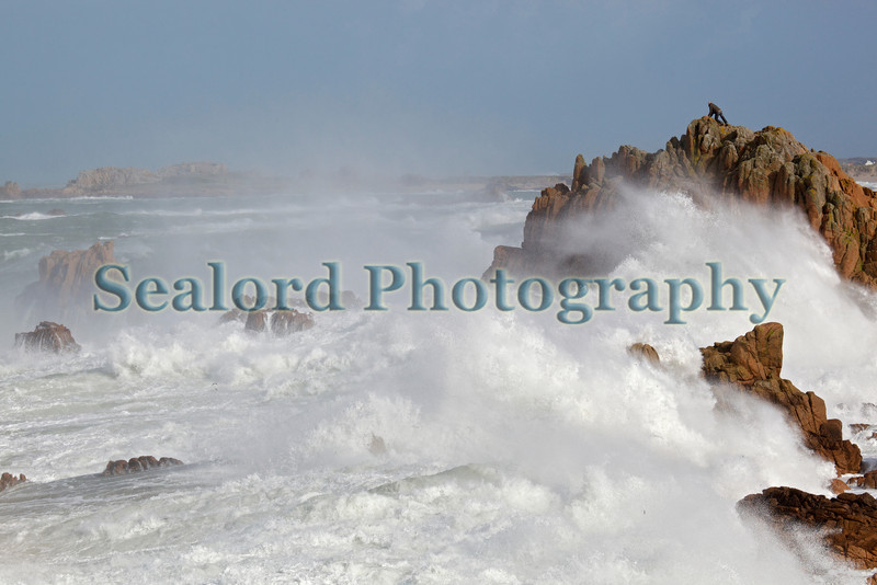 Fort Hommet Nature Reserve large wave white water 080214 ©RLLord 7986 smg