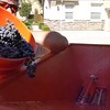 This a good video of the 2014 Zin crushing operation as well as some fun times during the pressing of the Merlot. Dad shot the opening crush video... the rest were samples form some longer runs I took....Enjoy!
