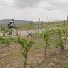 a future great Duvine guide cycling through the Moscato vines near Cassine in Piedmont.