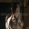 StunningSteedsPhoto-HR-6434