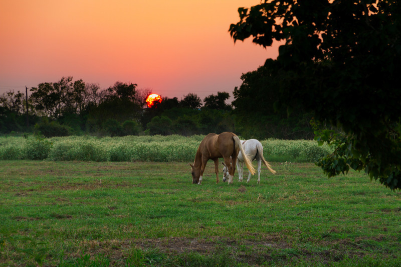 Sunset Graze