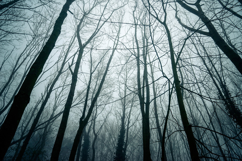 The spooky forest.  Singe RAW file taken with the #SonyA7R and Carl Zeiss 24-70MM lens. Edited in Lightroom only. 24mm, ISO 200, F8.0, -2 EV, 1/500. #ArtHakker