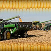 Three corn backgrounf 12x24 Lance