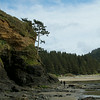 Beach near Heceta Head Lighthouse, Oregon