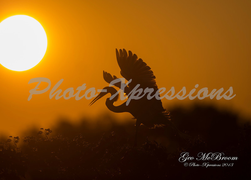 egret sunrise_7491