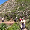 Hiking on Soberanes Canyon Trail the hillsides are cover with Prickle Pear Catus.