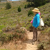Surveying the coastal scrub and wildflowers.