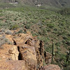Cottonwood Springs Spur Cross Ranch Tonto National Forest Metate Towhee Trail Arizona