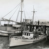 CRPA Astoria,Treasure Island,Bait Tanks,West,Shark Net,Pic Taken Astoria 1946,