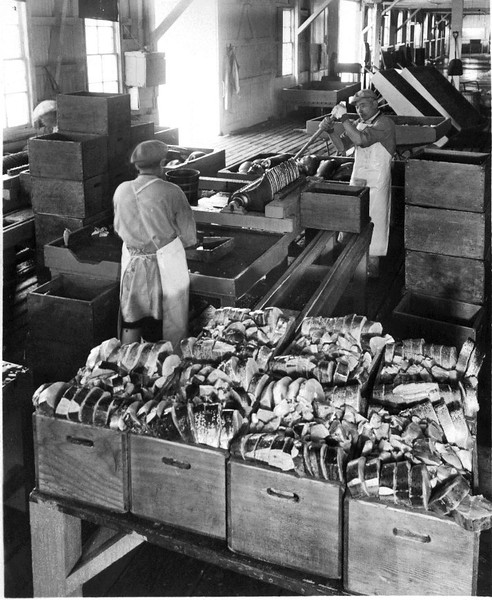 Fish Slicing 1 Pound Slices For 1 Pound Ovel Cans Astoria Oregon