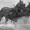 Horse Team Dragging Net to Beach,Astoria,Columbia River,1930's,