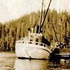 Schooner Kanaga,Taking Herring Bait From Holding Net,Smaller Seiner Seined The Bait,