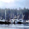 Herring Fleet,Seymour Canal,1970's,