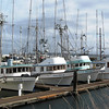 Shake,Ocean Belle,Ocean Home,Sylvia,Haven,Port Townsend,