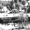 City Of Los Angeles,1970,Packed 145 Ton Tuna,John Gargas,Western Fisher Forground,