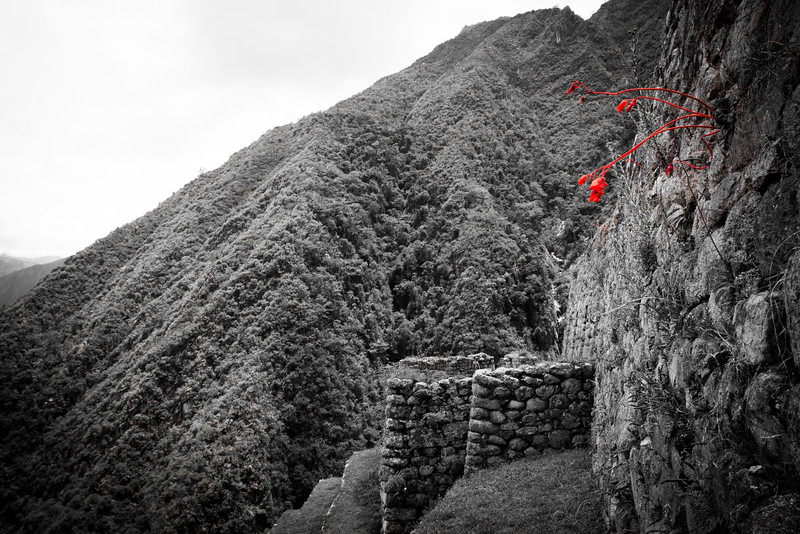 On our way to Macchu Picchu  The large ruins we stopped at half way. These red flowers were sprouting out of the wall.