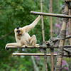 White Monkey up high