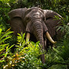 Elephant in the shrubs