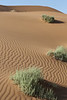 Sossusvlei - Morning Dune Walk - Green Shrubs on Red Sand Dunes 3
