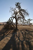 Sossusvlei - Morning Dune Walk - Silhoetted Tree and Its Shadow