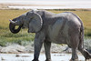 Etosha - Game Drive 2 - Elephant Drinking at Water Hole