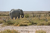 Etosha - Game Drive 2 - Another Elephant (1)