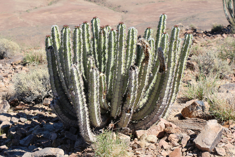 Fish River Canyon - More Canyon Views - Cactus
