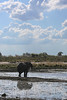 Kavango River - Nunda Lodge Game Drive - Elephant Drinking 4