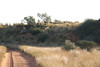 Kgalagadi Park - Drive into Park - The Lion on the Ridge by the Track