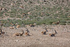 Kgalagadi Park - First Game Drive - Herd of Impala on River Bed 1