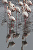 Walvis Bay - Flamingos 19