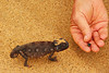 Swakopmund - Living Desert Tour - Trying to Feed the Chameleon