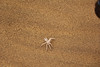 Swakopmund - Living Desert Tour - Poisonous Spider (2)