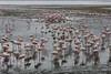 Walvis Bay - Flamingos 22