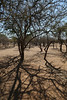 Himba Village Visit - Tree Shadows
