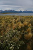 Ushuaia - Harbour and Beagle Channel Tour - Stop and Hike on Island 27