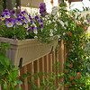 Front Porch Flower boxes