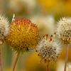 Seed heads transforming